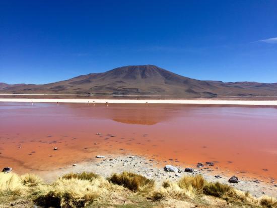 Pink Lake - Laguna Colorado in Bolivia